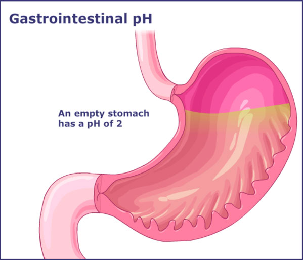 how pH varies throughout the gastrointestinal tract.